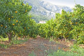 Naranjos de Fruteando