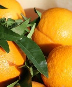 naranjas de mesa gran seleccion